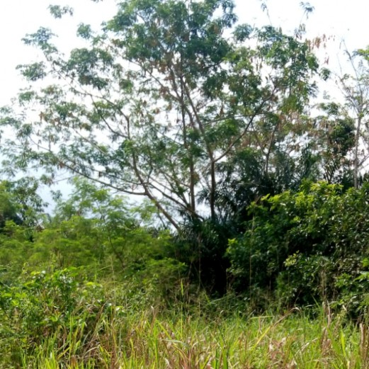 4.3 Acres of Bare Land at Badore, Ajah Available For JV